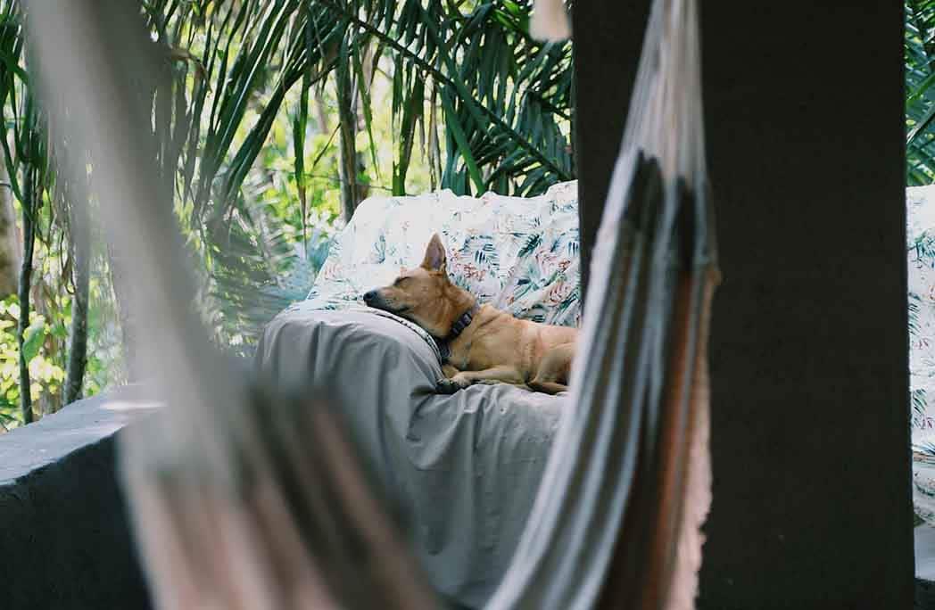 S'aménager un coin détente pour faire la sieste au jardin