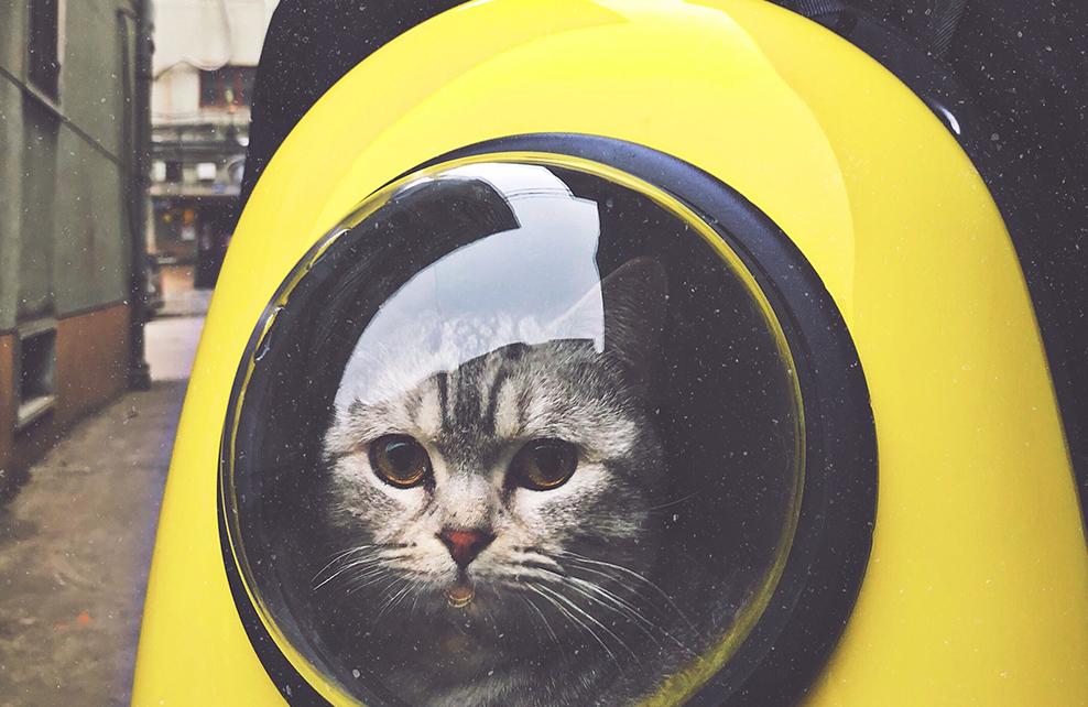 chat dans sac vitré