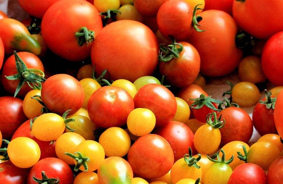 Etalage de tomates