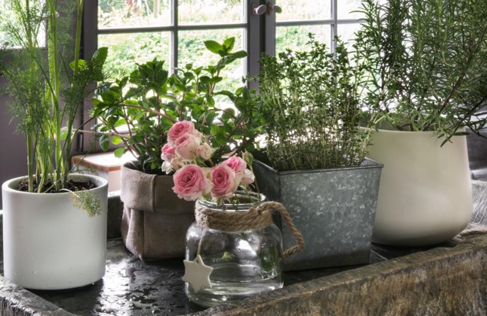 Fleurs, pot et bocaux au bord d'un fenêtre