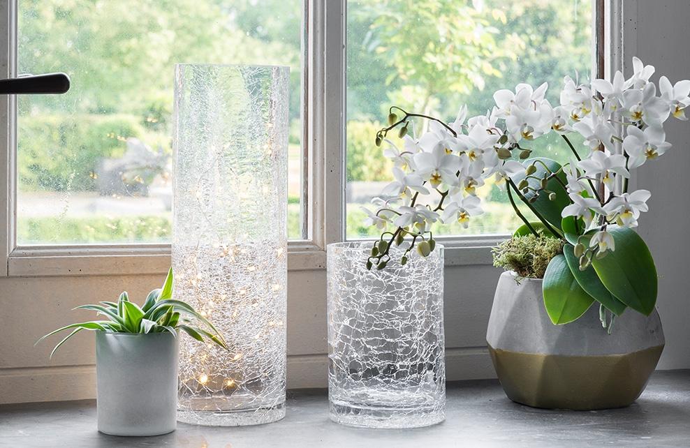 bord de fenêtre vase, pot et plante verte