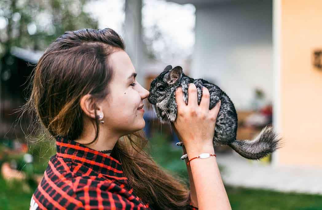 5 choses à savoir avant d'adopter un chinchilla domestique