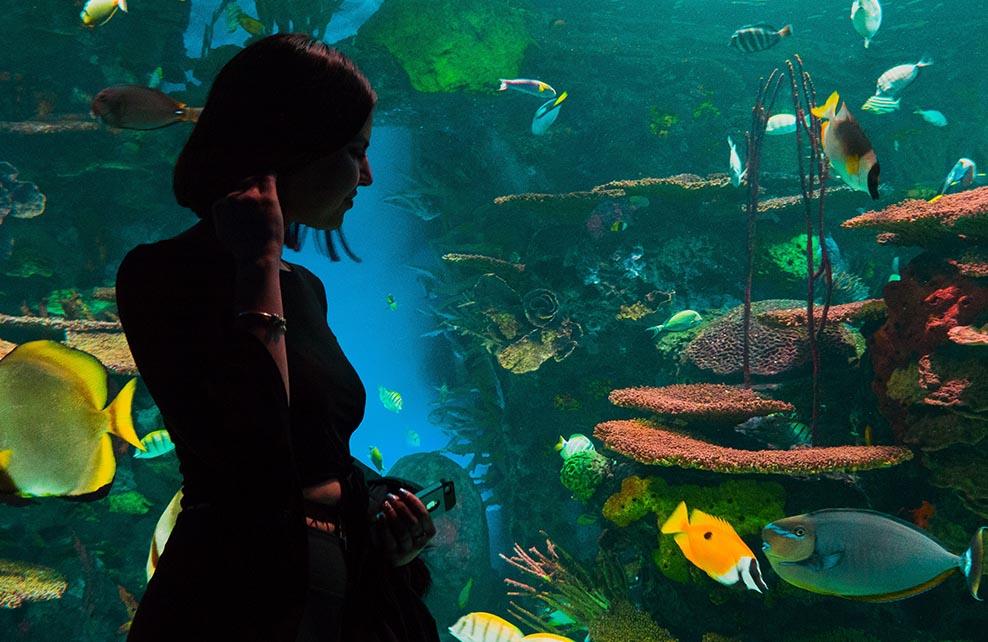 Femme devant un aquarium observant les poissons