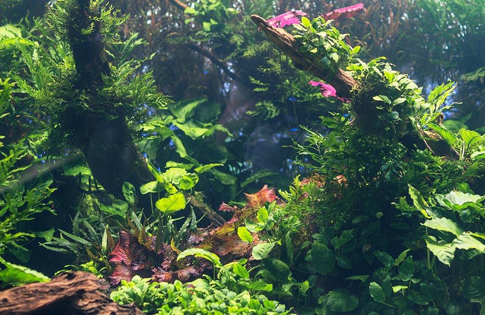 Décor d'aquarium aquascaping