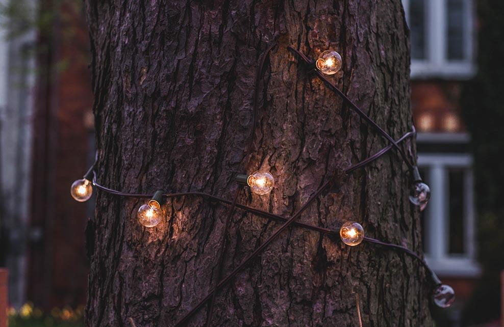 Guirlande lumineuse autour d'un arbre