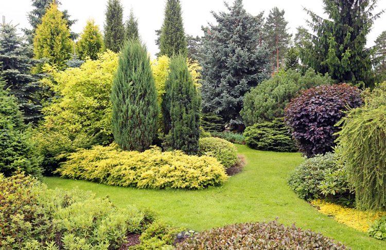 Jardin avec des coniferes