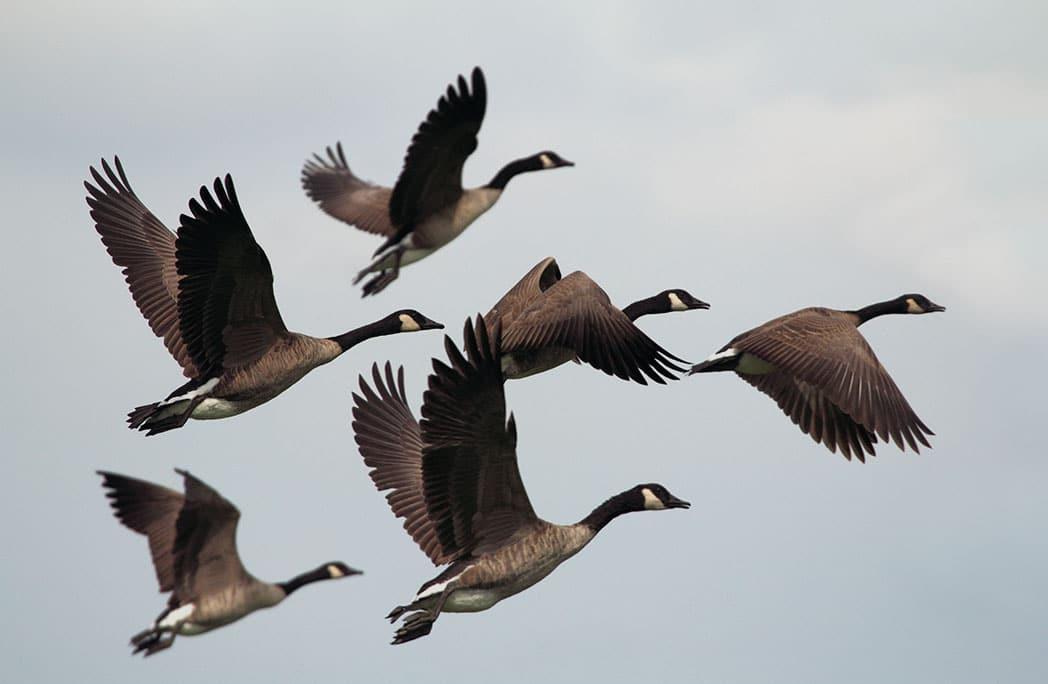 Top 6 des lieux où observer les oiseaux en France