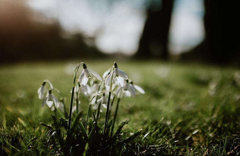 macrographie de fleurs blanches