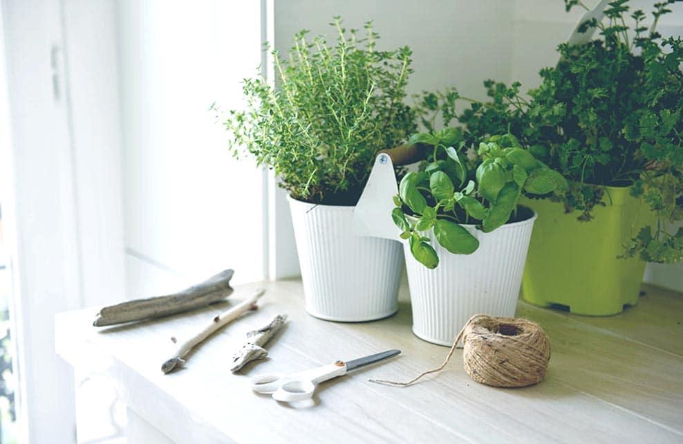 Matériel du DIY pour faire une suspension d'herbes séchées