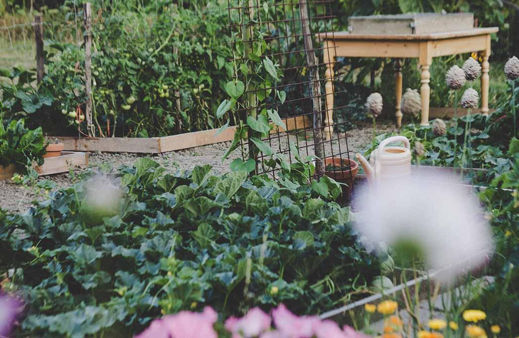 Potager au jardin