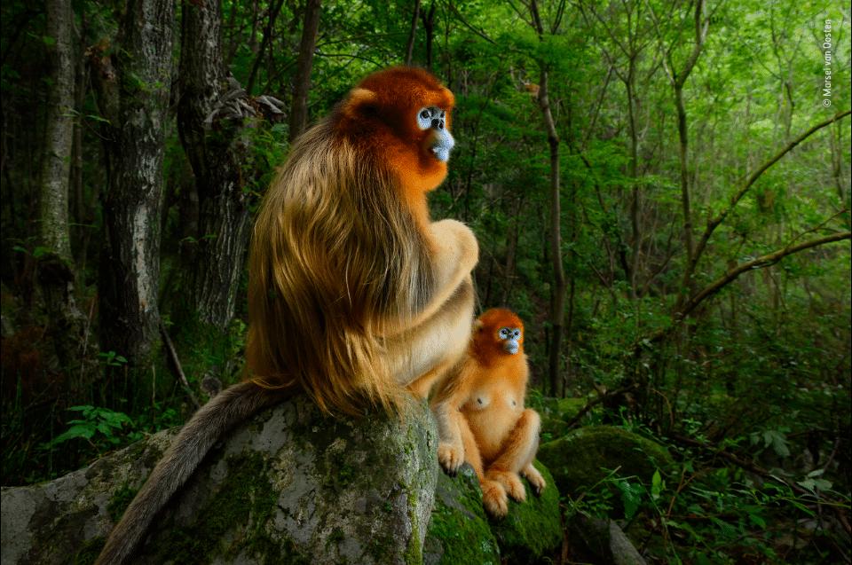 Deux chimpanzés dans la forêt