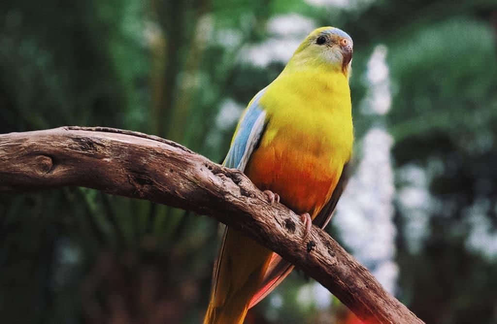 7 magnifiques oiseaux exotiques à avoir chez soi