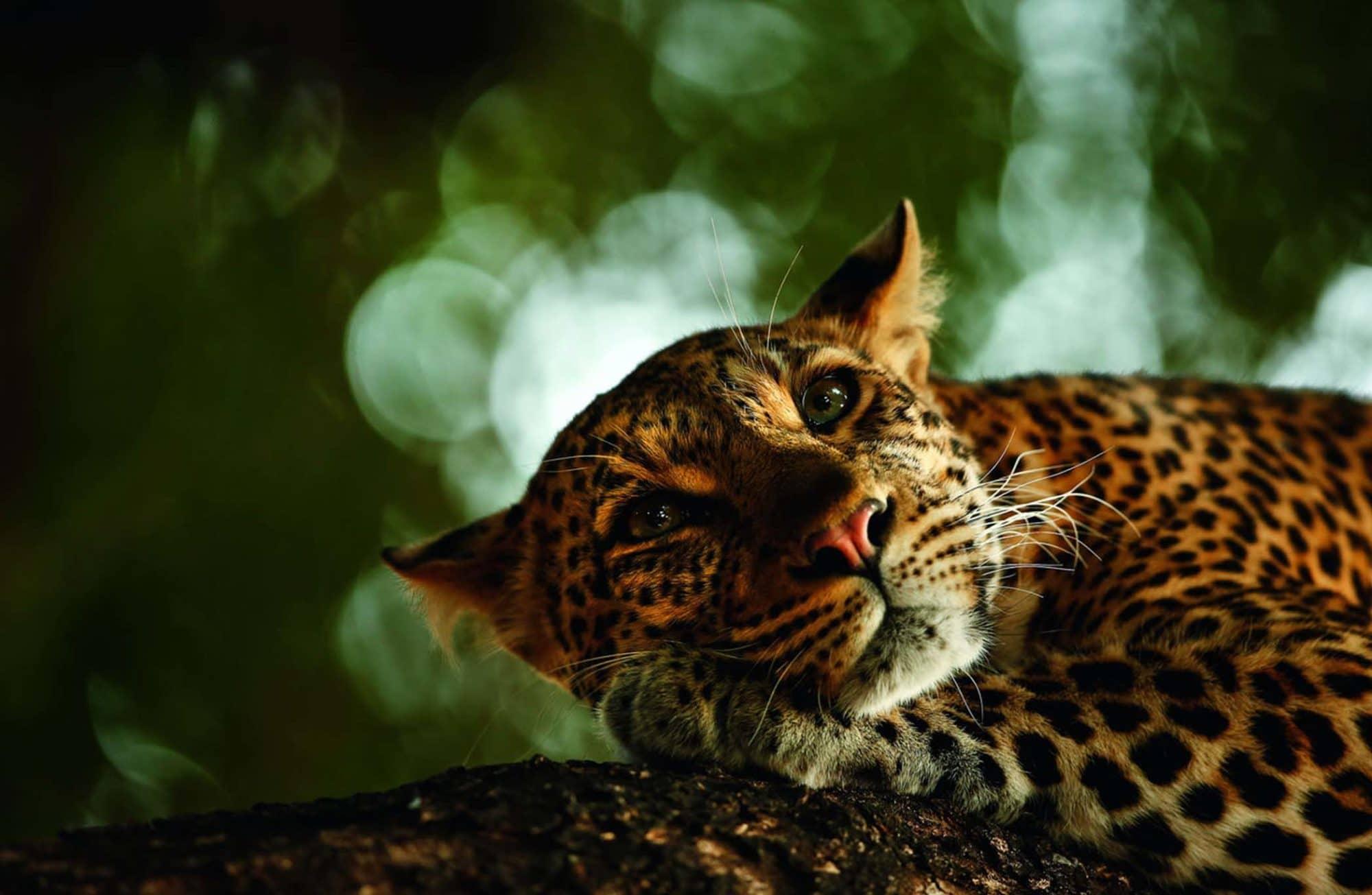 10 des plus belles photos d'animaux sauvages de 2018