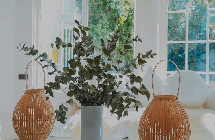 Salon avec bouquets d'eucalyptus et lanterne en osier