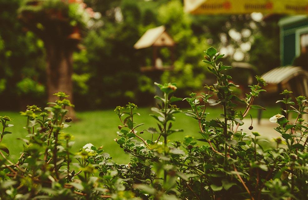 Gros plan sur feuilles dans jardin