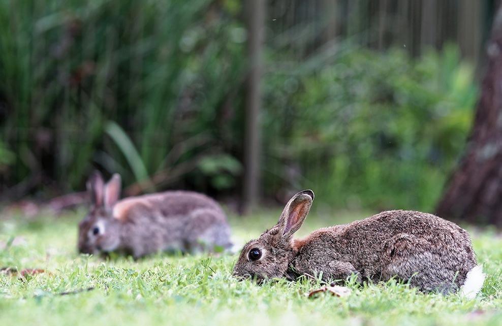 Deux lapins sur l'herbe