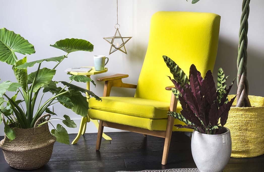 Fauteuil jaune dans un salon entouré de plantes vertes