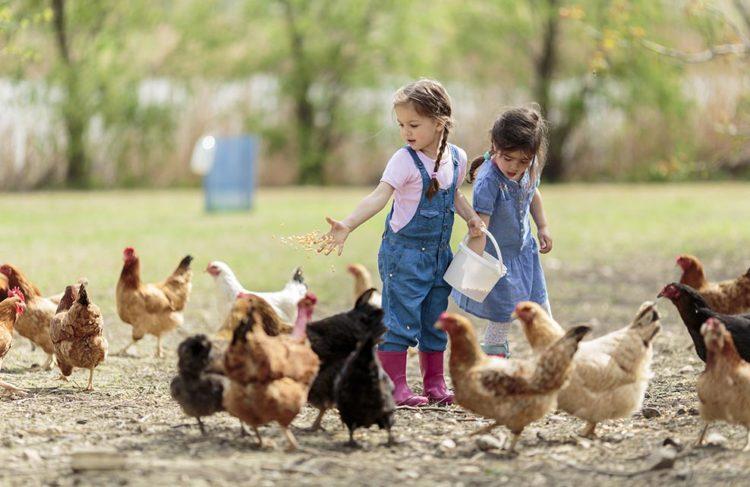 Petites filles à la ferme