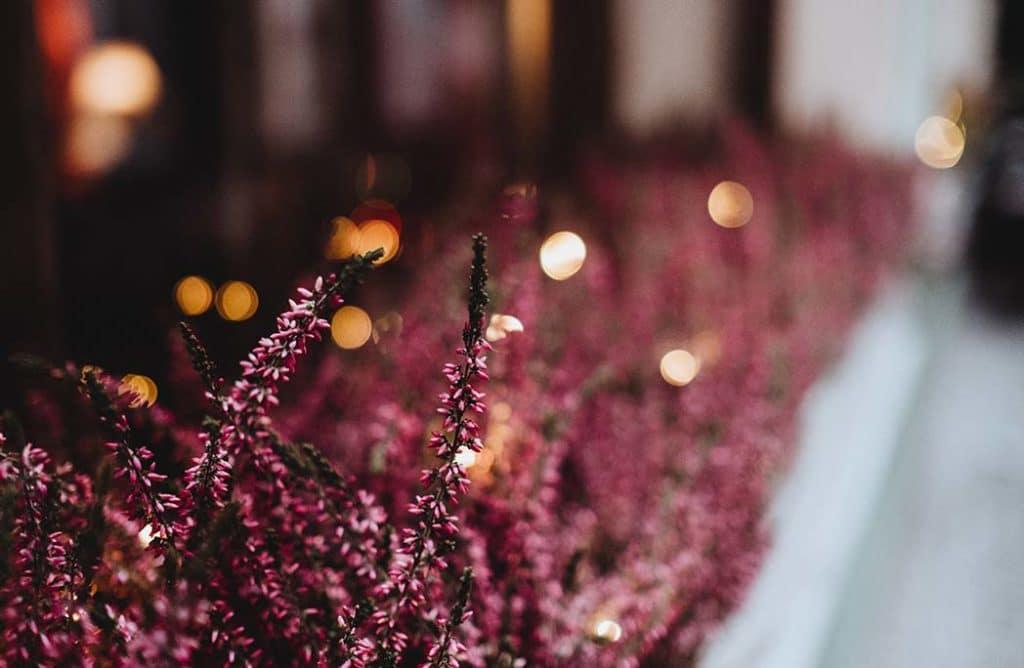 5 plantes résistantes pour végétaliser son balcon