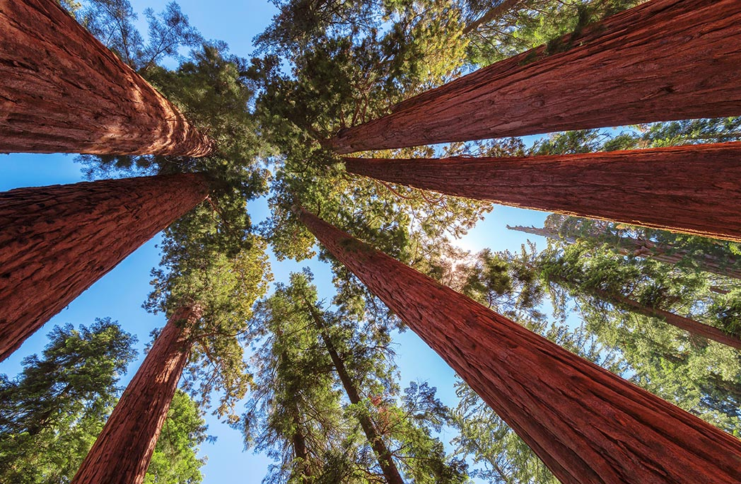 Parc de séquoias géants