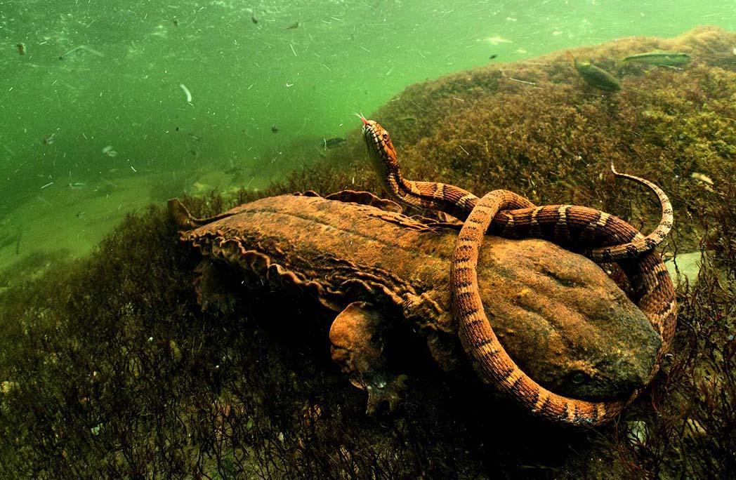 Serpent enroulé autour d'un tronc d'arbre sous l'eau