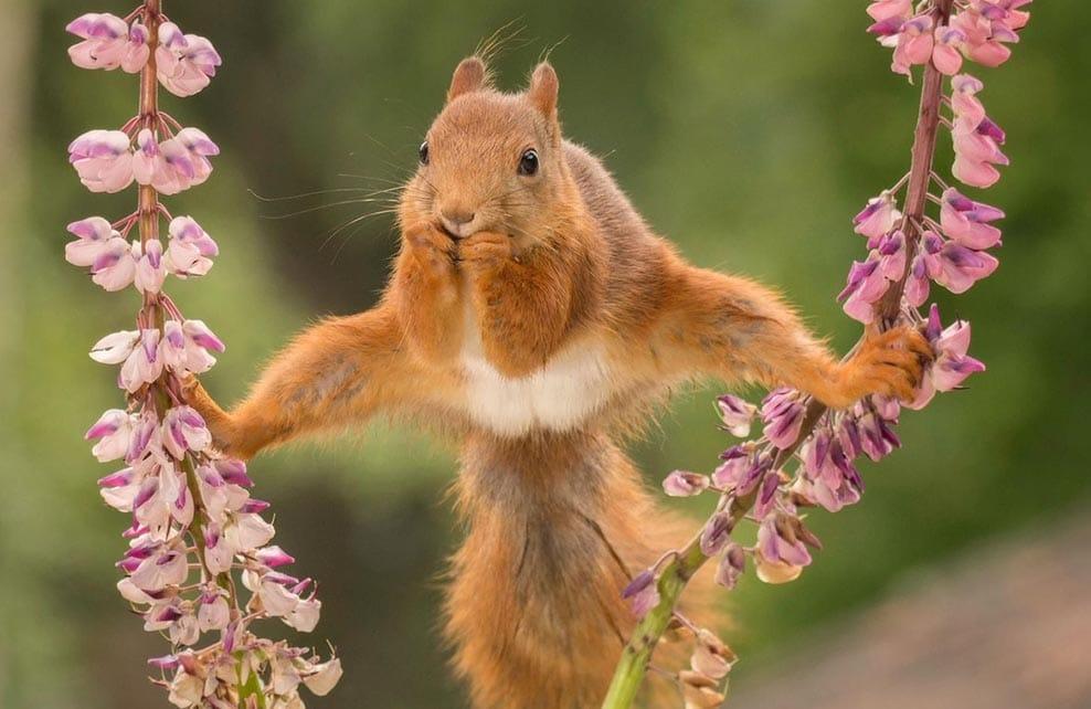 Ecureuil écartant les pattes