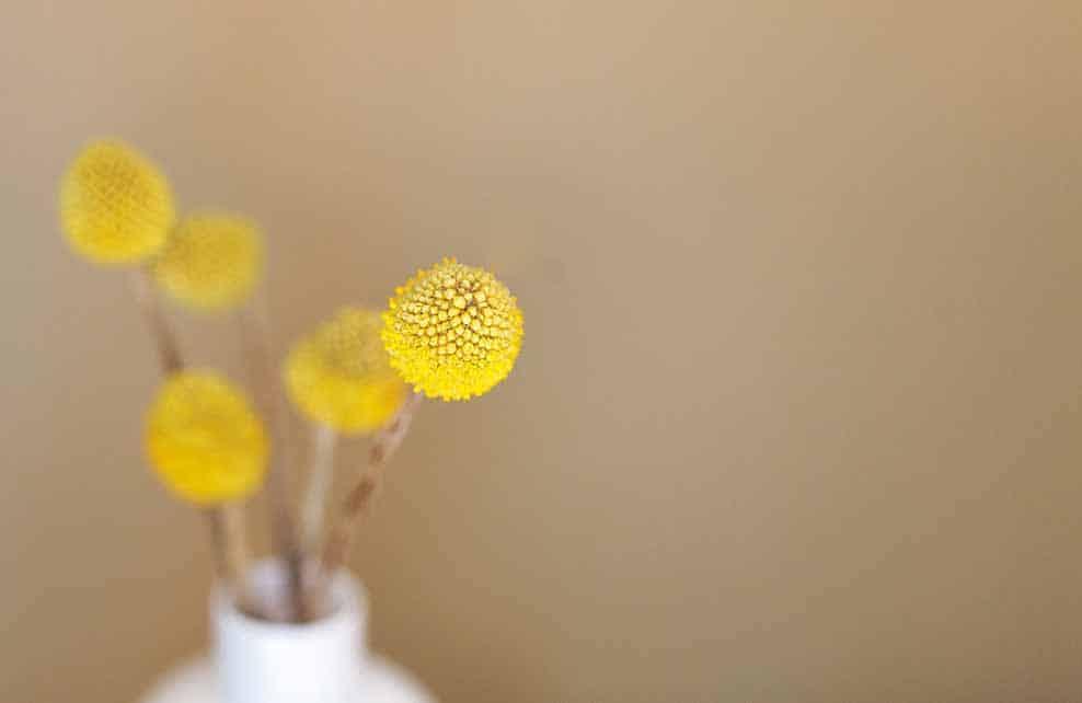 Fleurs jaunes séchées