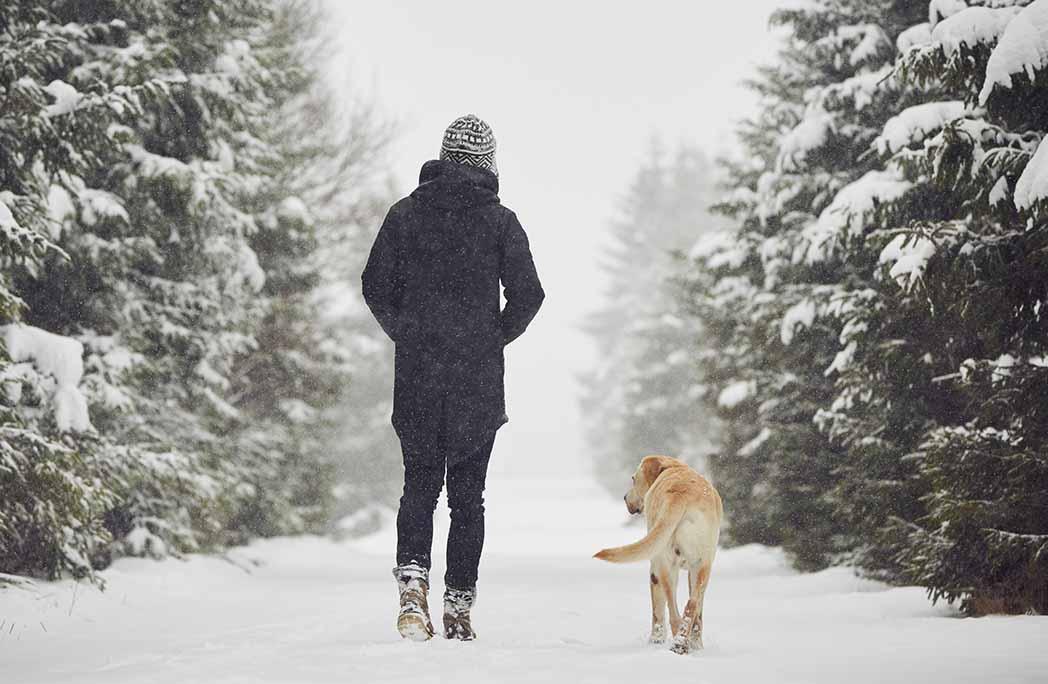 Femme marchant avec son chien dans la forêt l'hiver