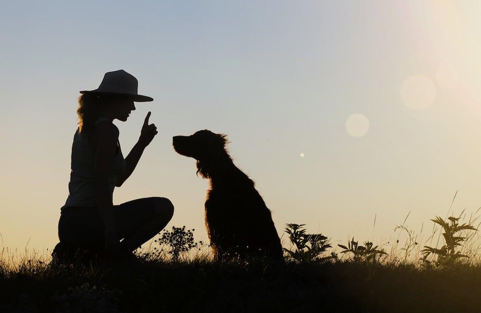 Dressage d'un chien avec son maître
