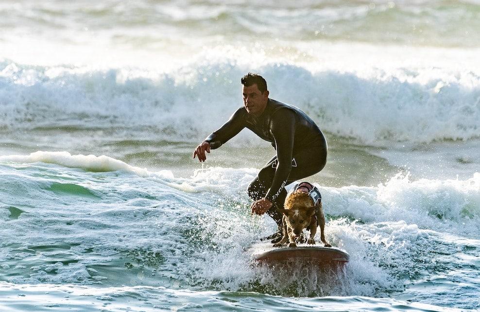 Chien qui surfe avec son maître