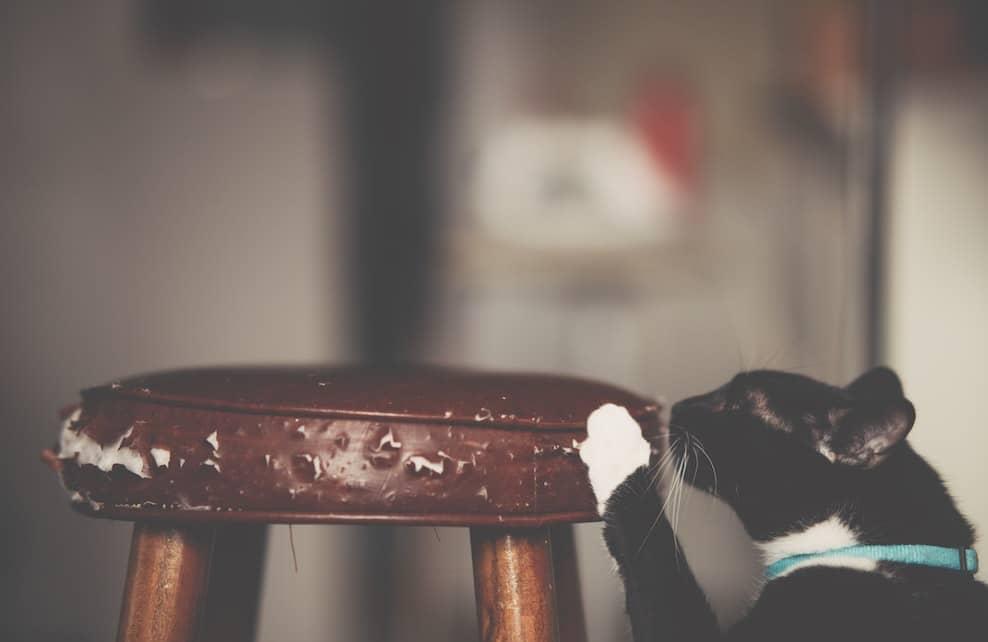 Chat faisant ses griffes sur un tabouret