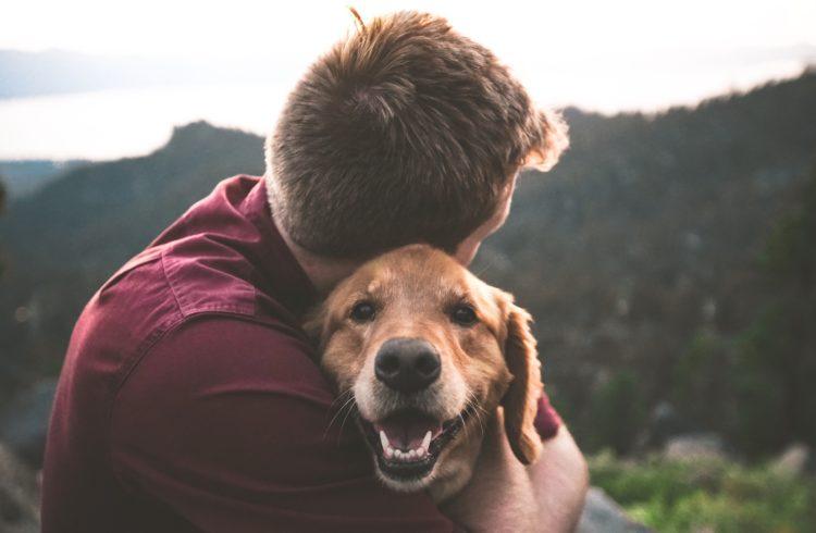 Calin avec un chien
