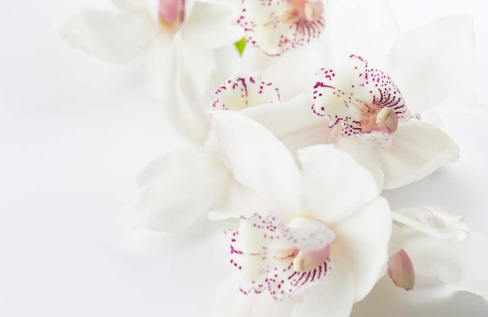 Fleurs blanches sur fond blanc