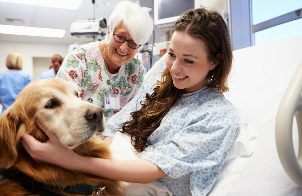 Chien de thérapie rendant visite à une patiente à l'hôpital