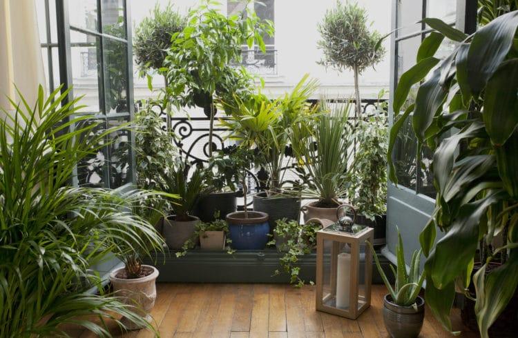 Salon avec parquet et de nombreuses plantes vertes devant une fenêtre ouverte