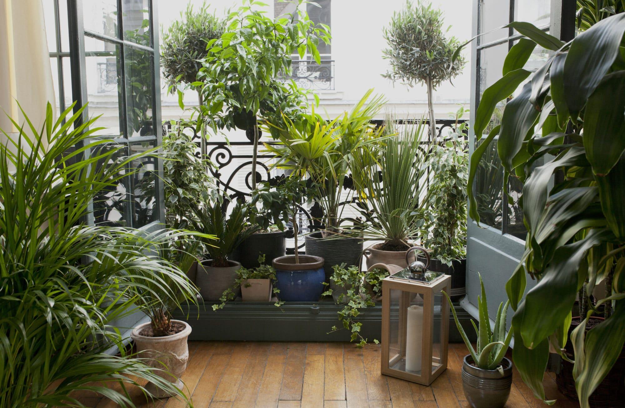 À chaque pièce, sa plante d'intérieur