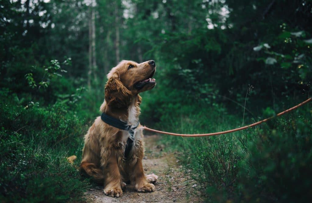 Les nouvelles tendances pour votre chien