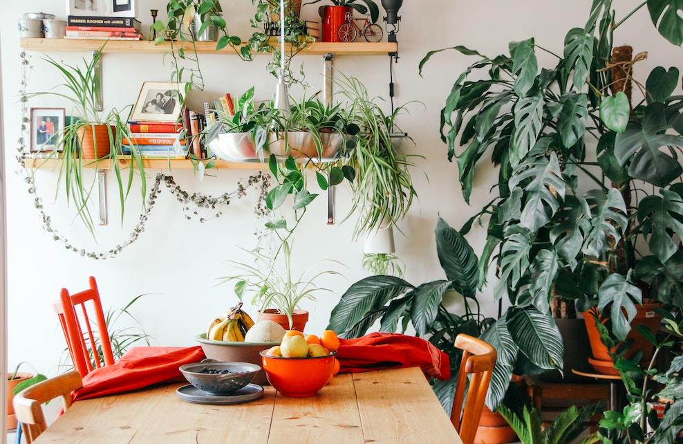 Cuisine colorée avec des plantes vertes et une corbeille de fruits