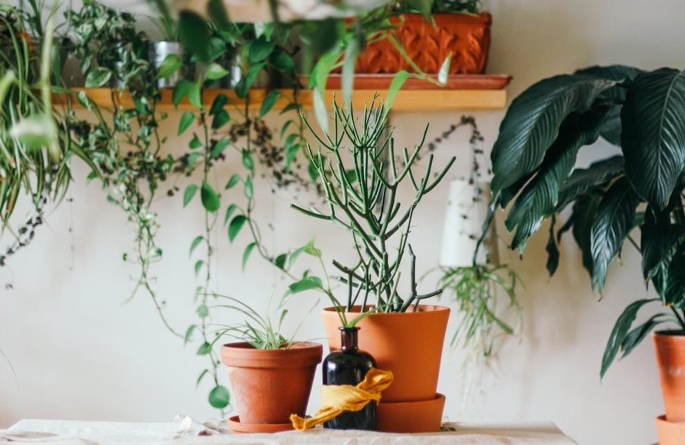 Pots de fleurs avec des plantes vertes et un flacon en verre sur une table