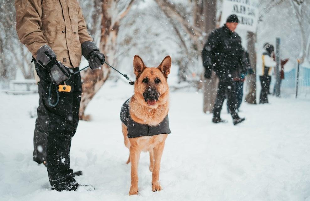 Chien policier dans la neige