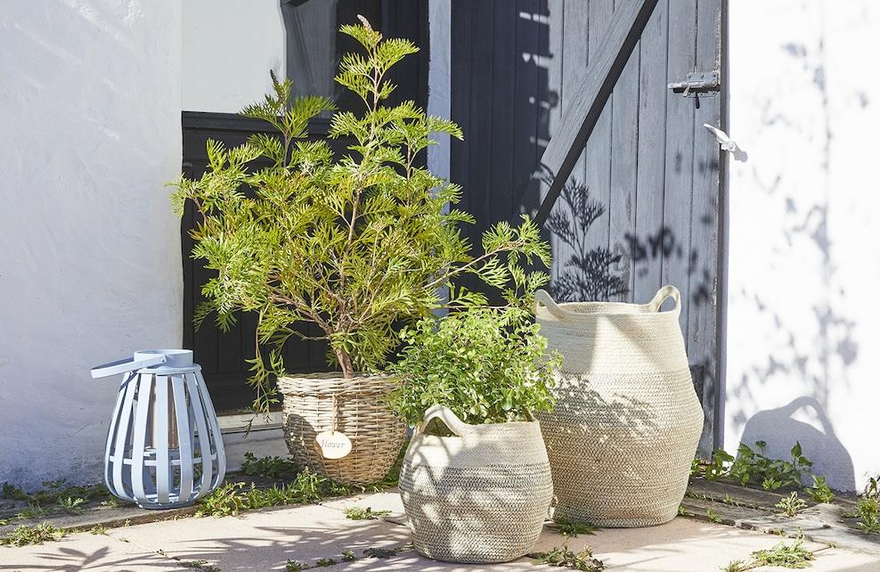 Paniers servant de cache-pots dans un jardin