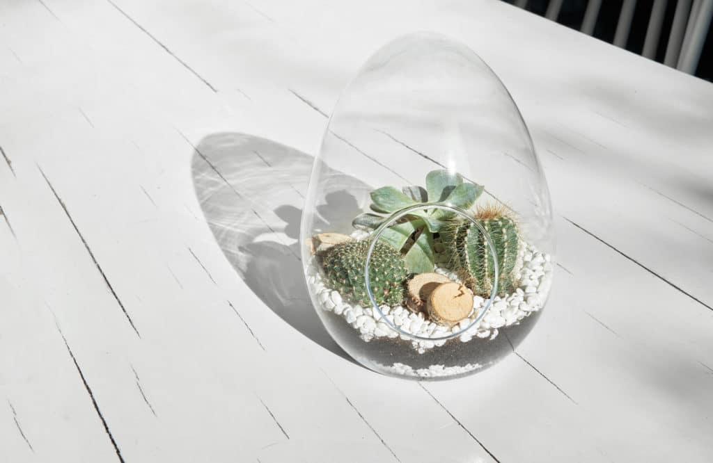 #DIY : Mon terrarium pour plantes miniatures