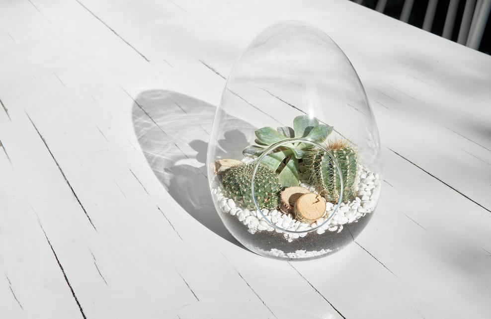 Terrarium placé sur une table blanche en bois