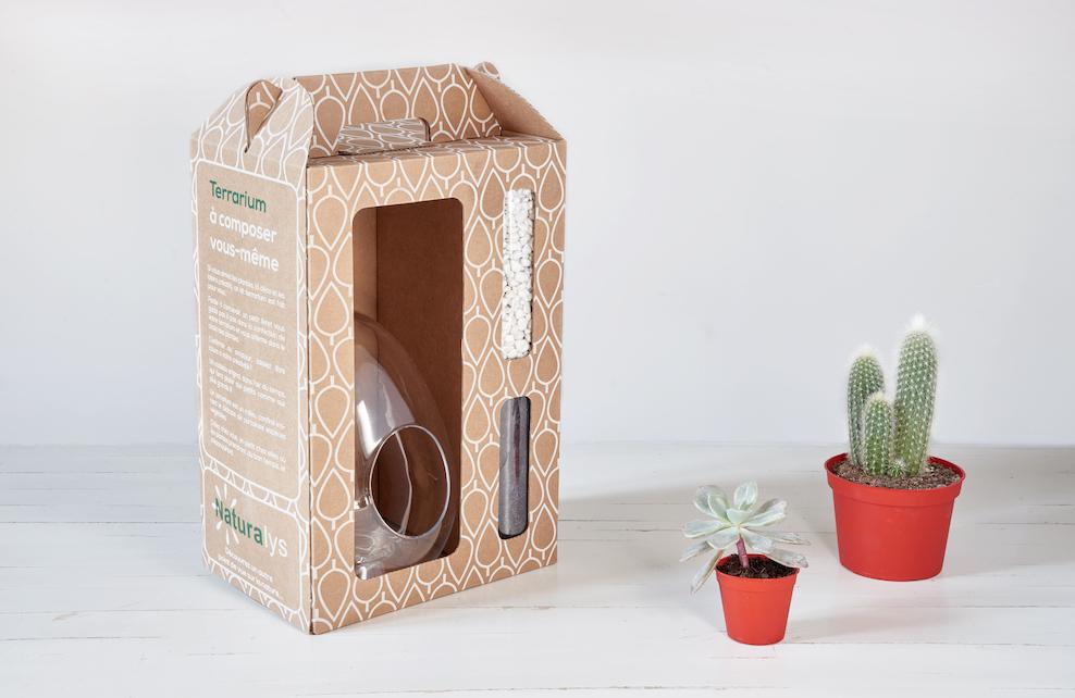 Matériel nécessaire pour créer un terrarium : kit Jardiland et plantes