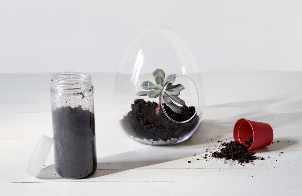 Etape 2 terrarium, verser de la terre dans le bocal