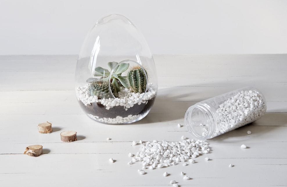 Planter cactus et succulentes dans le terrarium