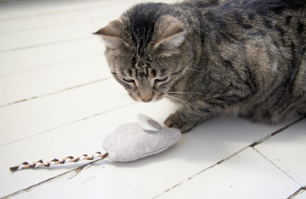 #DIY : Mon jouet pour chat