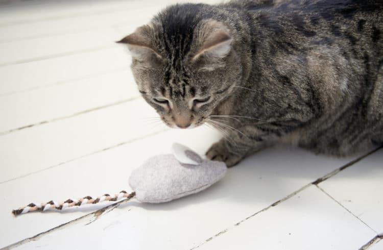 DIY jouet pour chat terminé
