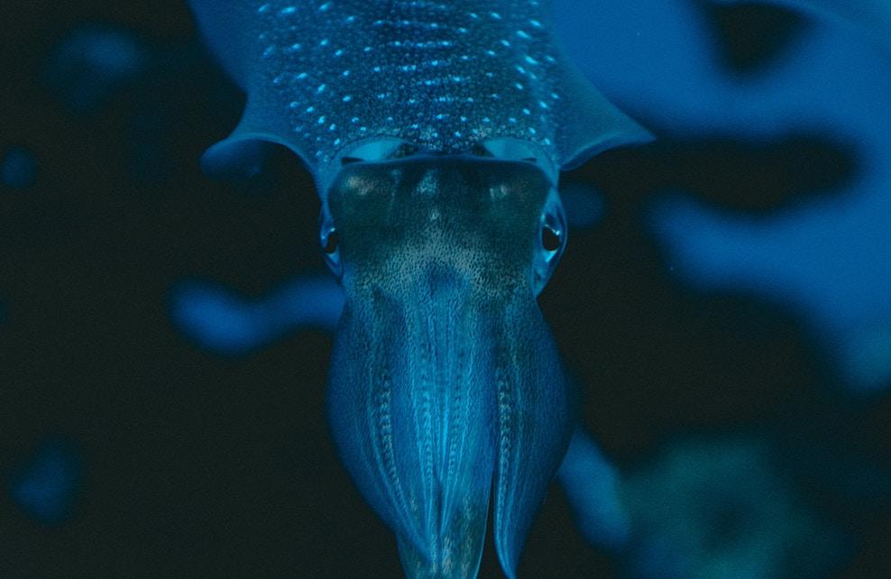 Calmar de verre dans l'océan