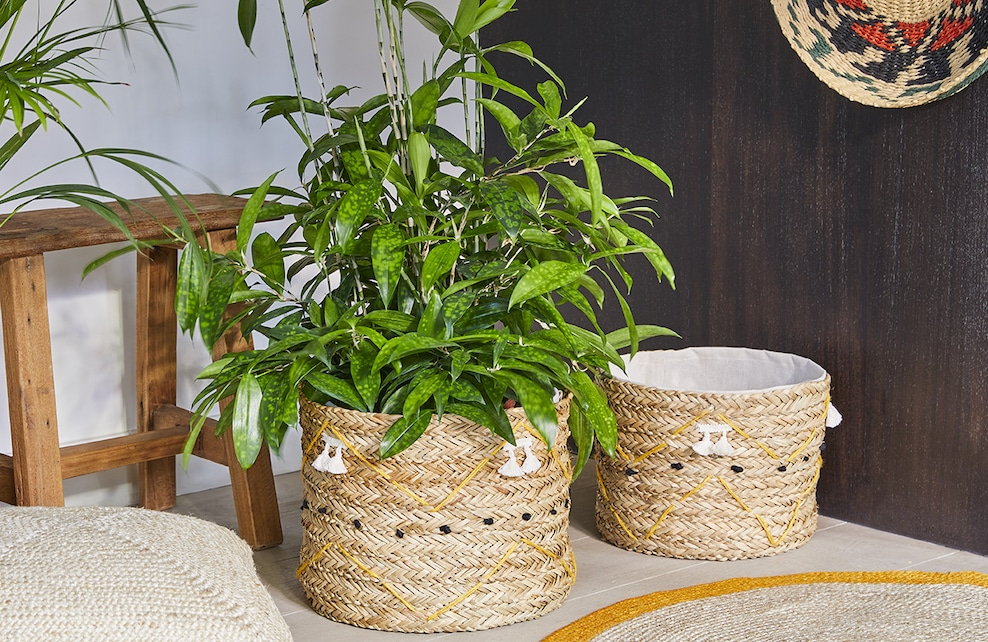 Panier contenant une plante verte